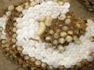 蜂群诚信经营种蜂群,行业专业的蜂群