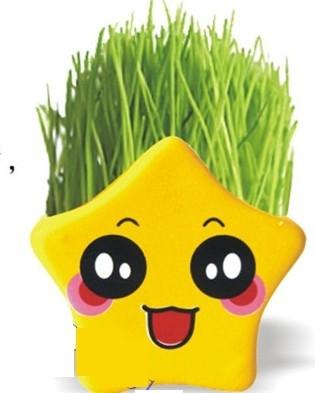 可爱黄色草娃娃 桌面迷你植物五星星草头娃